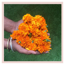 Load image into Gallery viewer, Marigold Puja or Pooja flowers from Rose Bazaar
