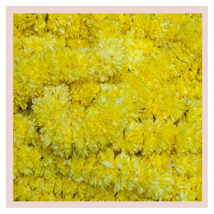 Sevanthi Chrysanthemum yellow farm fresh flower for Puja or Pooja Rose Bazaar Karuturi