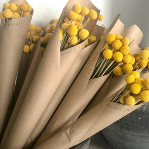 Everyone's favorite! Billy Buttons add instant cheer to the room... they're a bright pop of color, quirky, sculptural, modern... and they make a great gift, too! You can style them yourself in your favorite vase, and because they're preserved, they will keep their color forever!