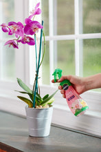 Load image into Gallery viewer, Miracle-Gro FBA_100195 Plant Food Mist (Orchid Fertilizer) 8 oz, Single, Multicolor