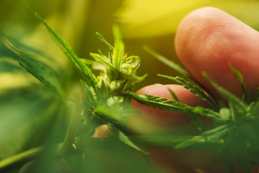 How Fast does CBD start to work?