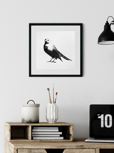 Blackbird Watercolor Print