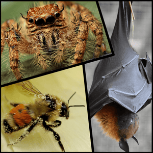 Spiders, Bats, and Bees... OH MY!