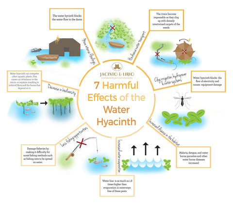 Environmental Hazards of the Water Hyacinth in the Philippines