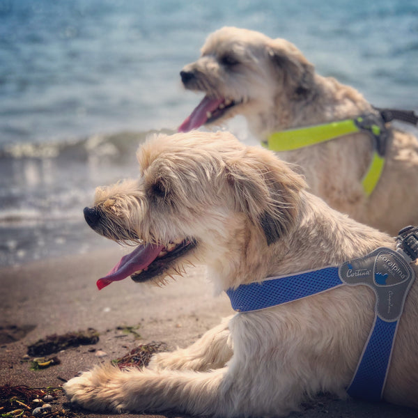 DOG FRIENDLY BEACHES ACROSS AUSTRALIA