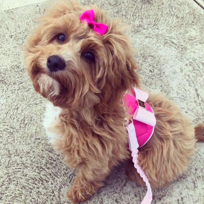 DOG HARNESS - FUCHSIA