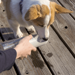 PETKIT TRAVEL WATER BOTTLE