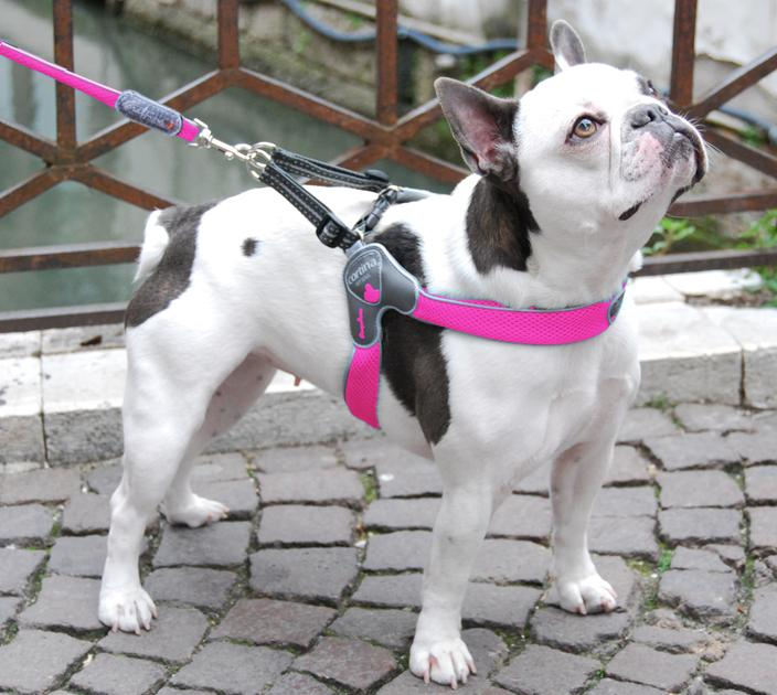 DOG HARNESS - THE CINQUETORRI PINK