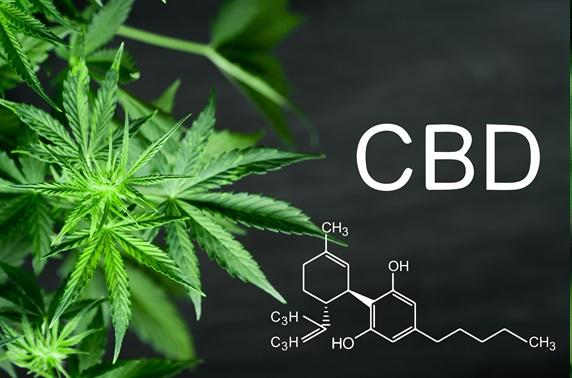 THE CBD CRASH COURSE