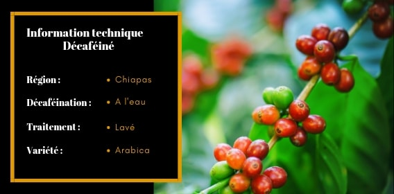 information-technique-décaféiné-mexique-sueno