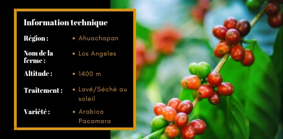 Info-techniques-los-angeles-morpho-cafe-fin