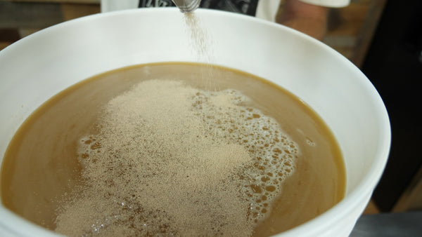 pitching yeast into cider