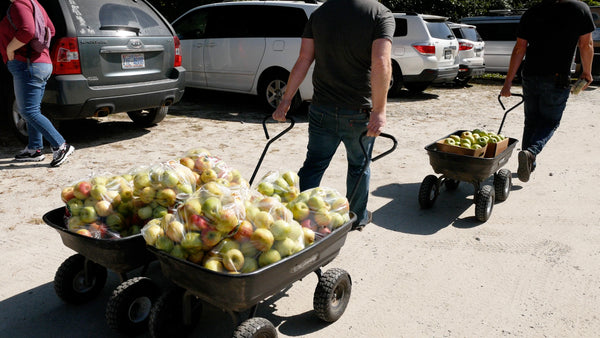carrying fresh apples and cider apples