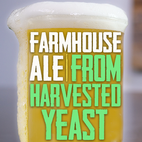 Farmhouse ale recipe from harvested yeast