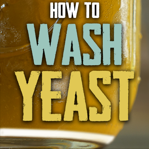 How to harvest and wash yeast