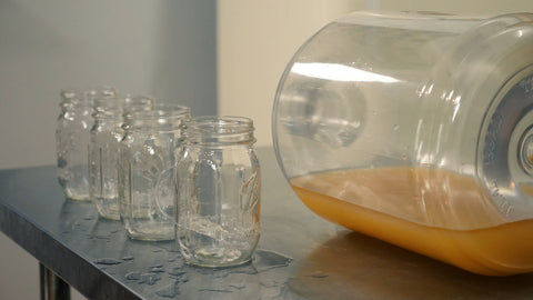 sanitized mason jars next to carboy with settling harvested yeast