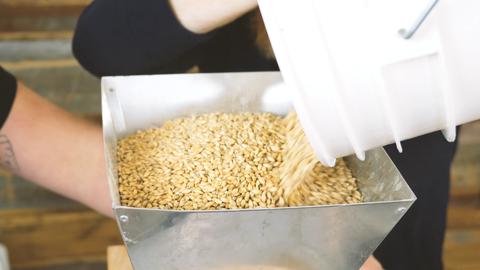 pouring grain into a grinder to finely crush it