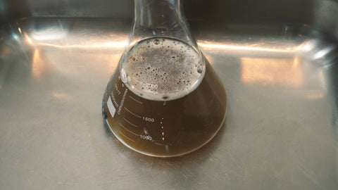cooling erlenmeyer flask filled with dry malt extract solution down using a sink filled with cold water