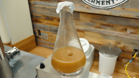 yeast starter on a stir plate