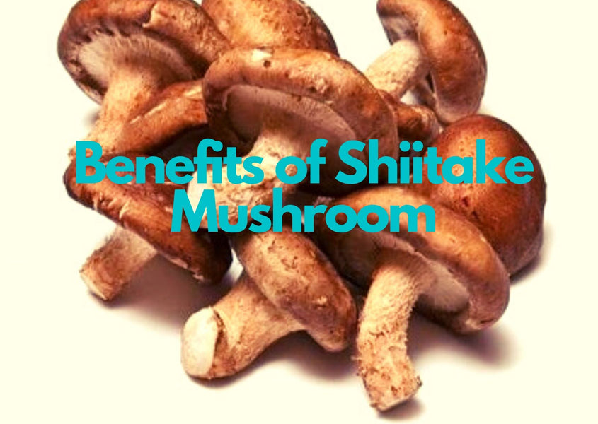 Why Shiitake Mushrooms?