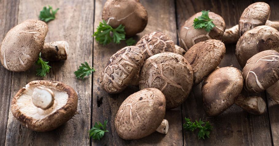 Which mushroom is the healthiest for you?