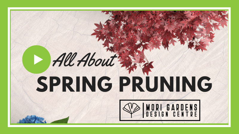 Pruning Deciduous Trees & Shrubs