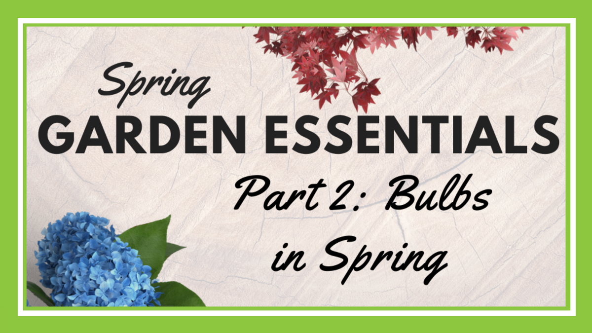 All About Spring Bulbs