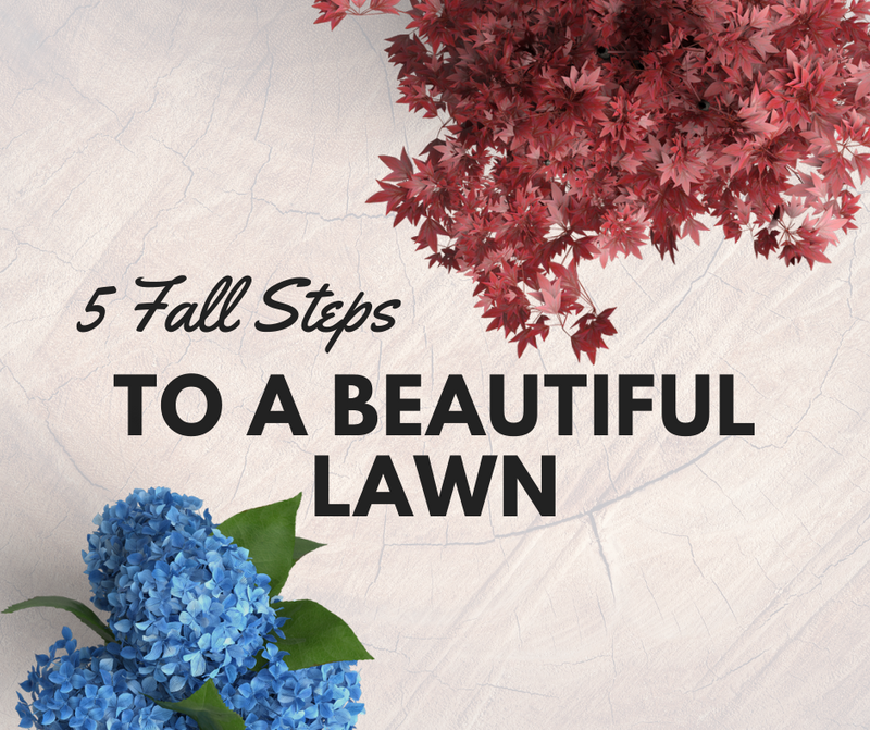 5 Fall Steps To A Beautiful Lawn