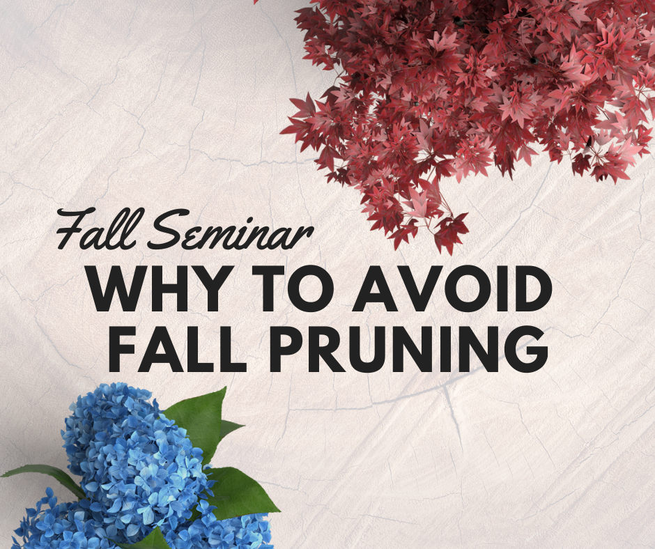 Why you shouldn't prune plants in the fall