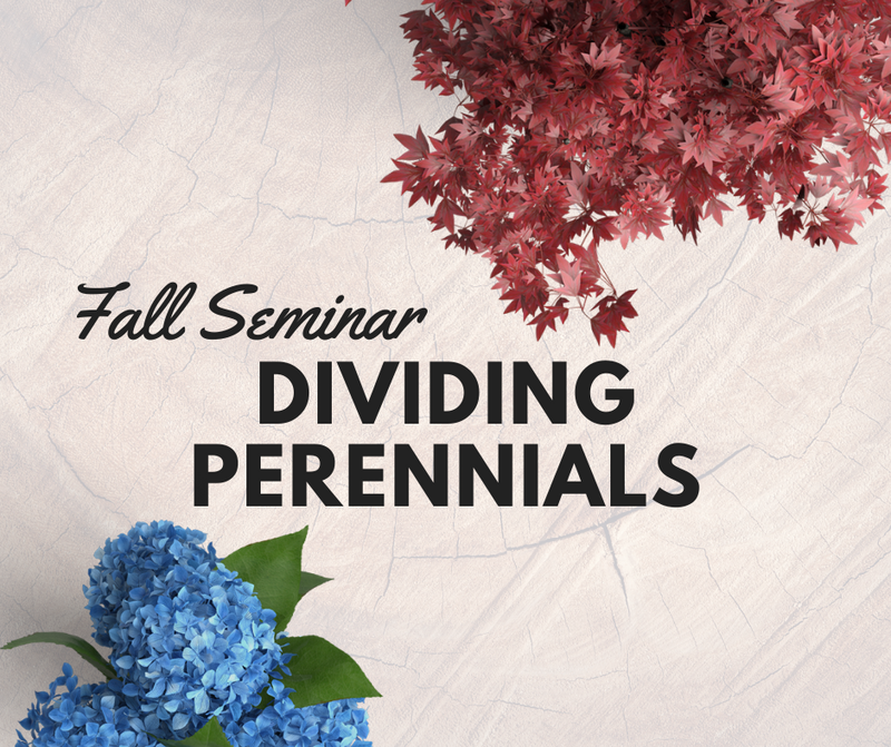 Dividing Perennials In The Fall