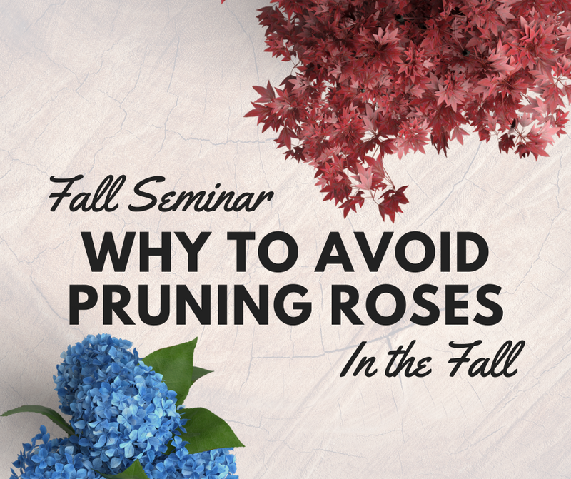 Fall Rose Care