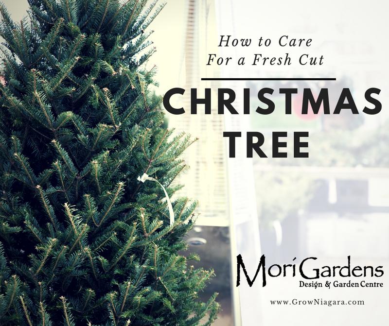How to Care for a Fresh Cut Christmas Tree