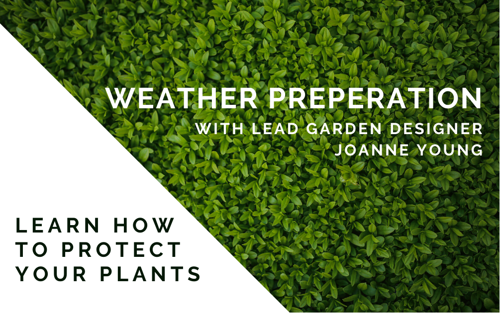 Weather Warning: Protecting Your Plants