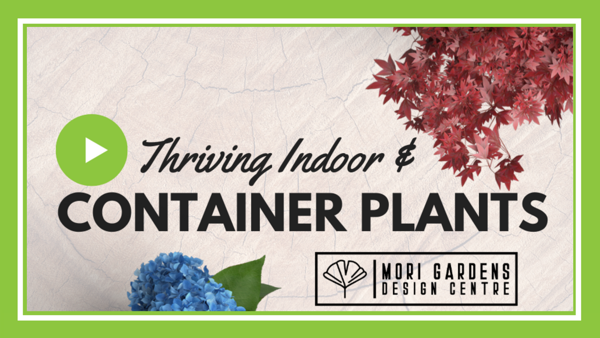 Indoor & Container Plant Care