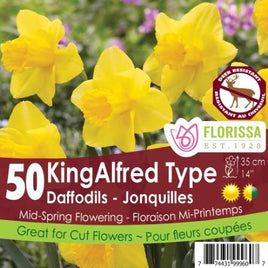 Daffodil King Alfred Narcissus- Preorder - Mori Gardens