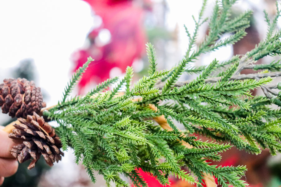Evergreen with pine cones