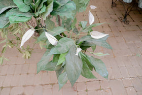 Artificial - Peace lily