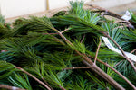 White Pine Bundle