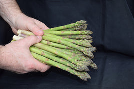 Jersey Giant Asparagus