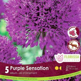 Alliums Purple Sensation - Preorder - Mori Gardens
