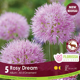 Alliums Rosy Dream - Preorder - Mori Gardens