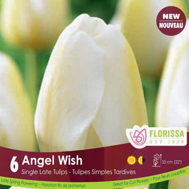 Tulips Angel Wish - Preorder - Mori Gardens