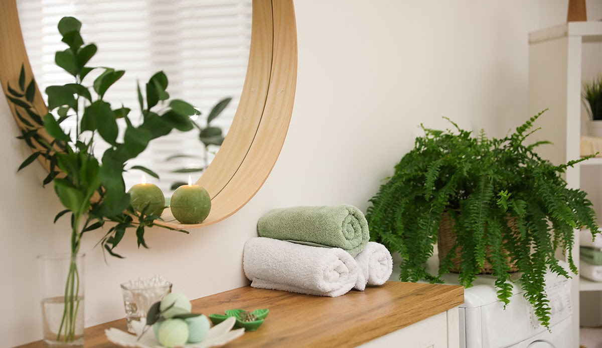 Houseplant next to a shelf holding rolled towels