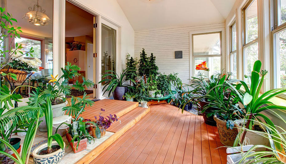A sunroom filled with greenery.