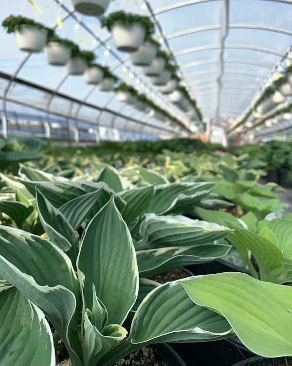 J.A. LAPORTE FLOWERS & NURSERY – OPERATIONS UPDATE