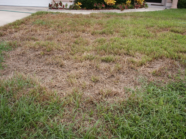 How to Identify and Treat a Chinch Bug Infestation