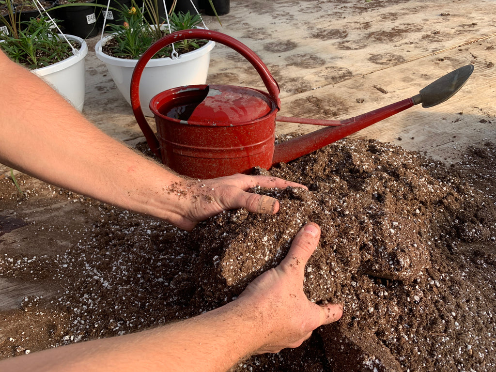 Hands mixing seedling soil with a red watering can in the background