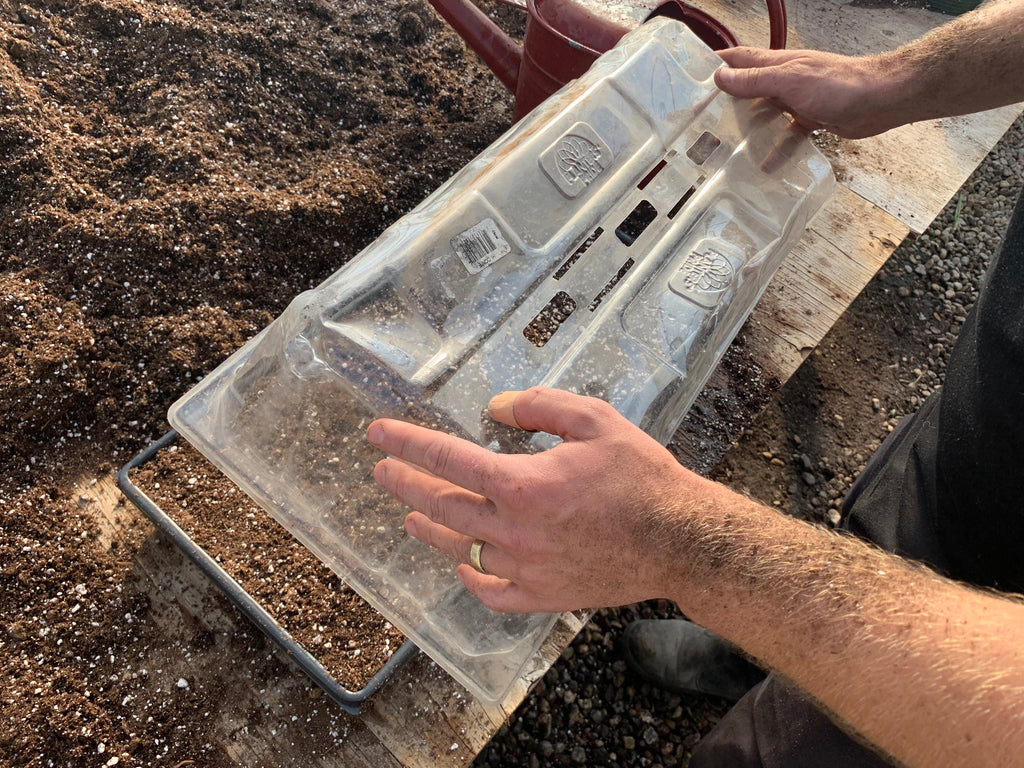 Clear lid being placed over a tray filled with soil