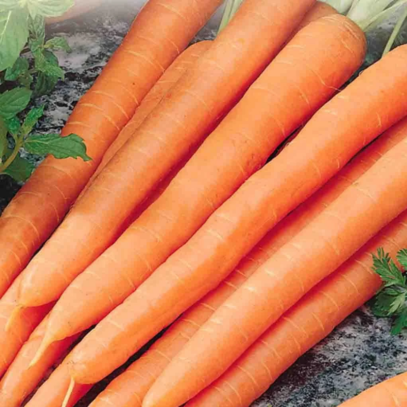 Dozen of orange carrots