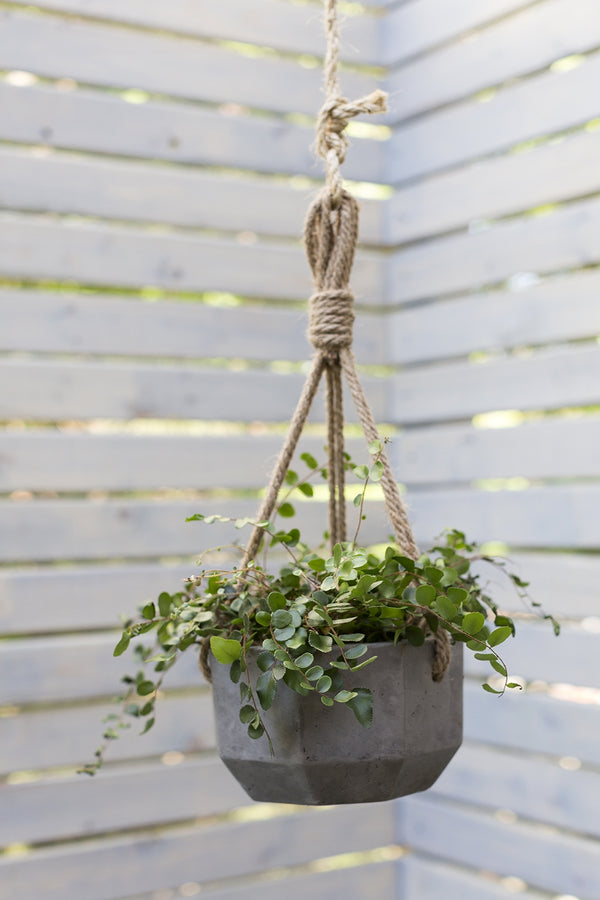 Dark grey ceramic hanging planters with brown hanging rope styled with green leafy plant.